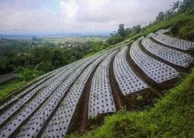Lahan pertanian milik masyarakat sekitar yang masih bisa kita jumpai