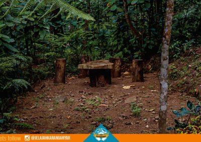 Tempat duduk dari batang pinus menikmati suasana hutan
