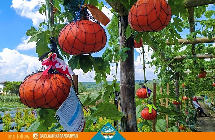 kebun buah di rumpun agro